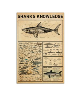 """Sharks Knowledge Board Wall Poster Vertical 7x11"""" 16x24"""" 24x36"""""""