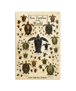 """Sea turtles of the world Wall Poster Vertical 7x11"""" 16x24"""" 24x36"""""""